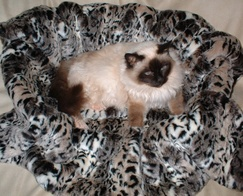 Wild Cat Faux Fur Pet Blanket